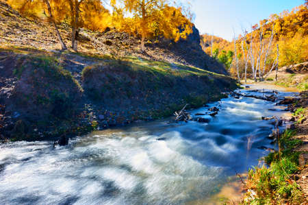 The autumn trees and river. Stock Photo