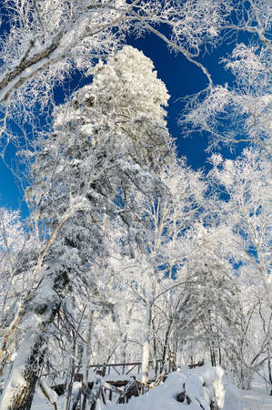 The soft rime and snow scenic of Chinas Snow Town.