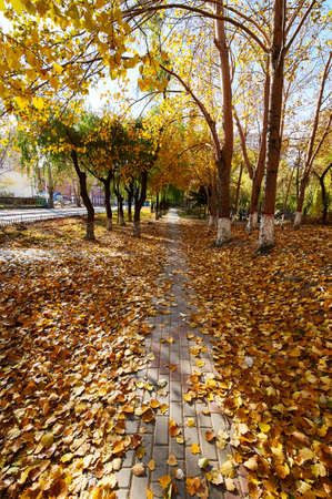 The shady path of autumn in the park.