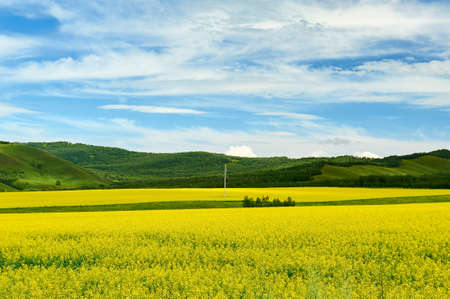 Hulunbuir grasslands of inner Mongolia.