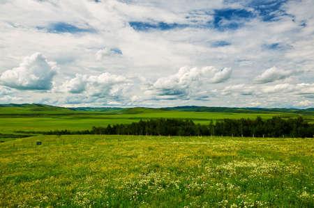 The summer Hulunbuir grassland of China landscape.