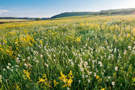 the Hulunbuir Prairie in China's Inner Mongolia Autonomous Region ushered in the most beautiful season. Near Shiwei, a small town on the Sino-Russian border, green grass and wild flowers are in full bloom.