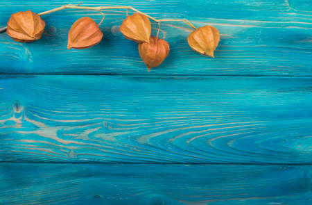 The orange physalis on a blue wood background