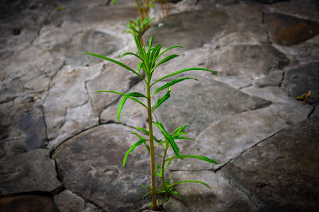 New life in the green world. Green plant growing in arid soil and cracked ground. New life from the stone. Ecology Concept. New life and environmental. Fresh young plant. Imagens - 104197915
