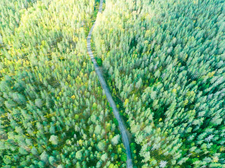 Aerial view of a country road in the forest with moving cars. Beautiful landscape. Captured from above with a drone. Aerial bird's eye road with car. Aerial top view forest. Texture of forest view from above.