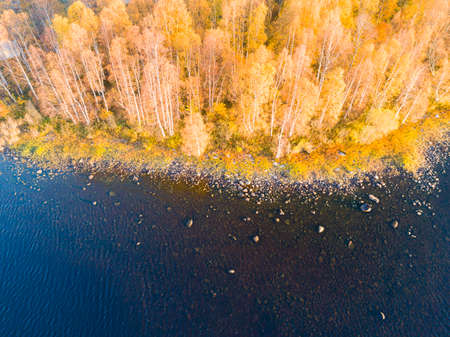 Aerial view over forest during vibrant autumn colors. Aerial view of seashore with stone. Coastline with sand and water. Aerial drone view of forest with yellow trees and beautiful lake landscape from above