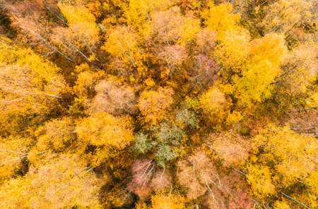Aerial view over forest during vibrant autumn colors. Aerial view of woods. Aerial autumn forest. Aerial drone view of forest with yellow trees and beautiful landscape from above.
