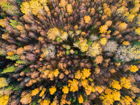 Aerial view over forest during vibrant autumn colors. Aerial view of woods. Aerial autumn forest. Aerial drone view of forest with yellow trees and beautiful landscape from above. Aerial view of fall foliage