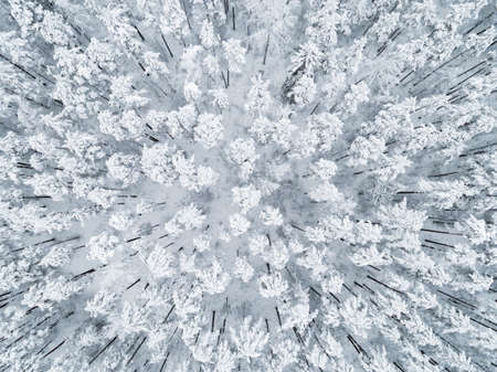 Aerial view of a winter snow-covered pine forest. Winter forest texture. Aerial view. Aerial drone view of a winter landscape. Snow covered forest. Aerial photography Stock Photo