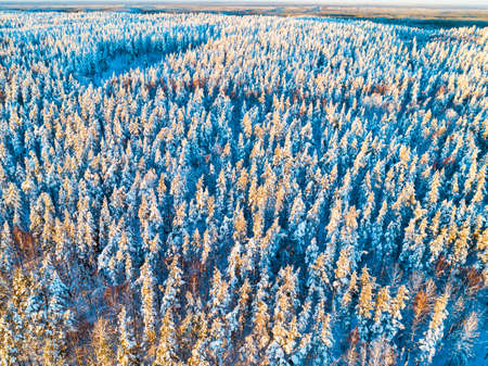 Aerial view of a winter snow-covered pine forest at the sunset. Winter forest texture. Aerial view. Aerial drone view of a winter landscape. Snow covered forest. Aerial photography Stock Photo