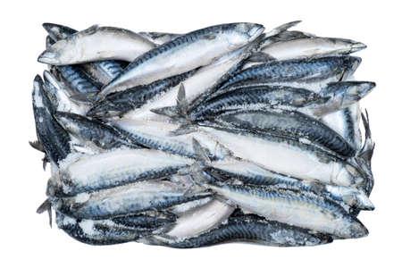 Frozen mackerel isolated. Frozen group of fish. Iced fish. Heap of mackere isolated on white background. Mackerel pattern. Mackerel texture. Fish background
