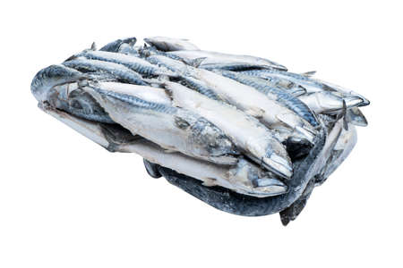 Frozen mackerel isolated. Frozen group of fish. Iced fish. Heap of mackerel isolated on white background. Mackerel pattern. Mackerel texture. Fish background 免版税图像