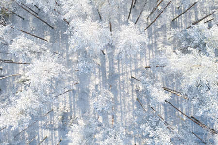Aerial view of a winter snow covered pine forest. Winter forest texture. Aerial view. Aerial drone view of a winter landscape. Snow covered forest background
