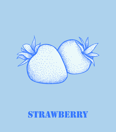 strawberry fruit vector.Garden strawberry fruit or strawberries