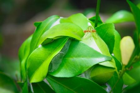 congruity: Formiche e foglie - Stock Image