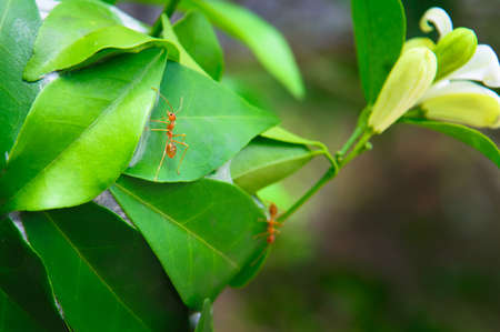 congruity: Ants and leaves - Stock Image