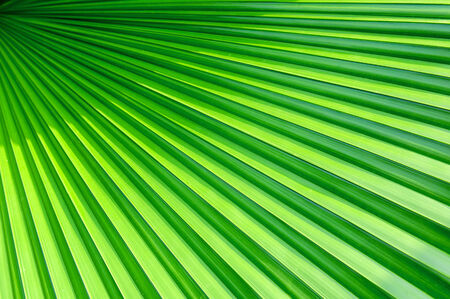 Lines abstract image of Green Palm leaves photo