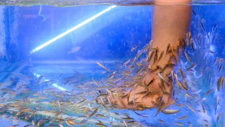 Pedicure fish spa treatment  Close up of fish and feet in blue water  Stock Photo