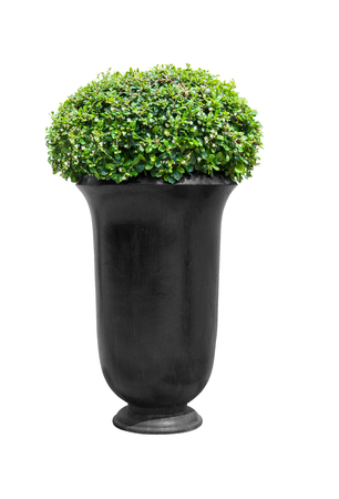 Park flowerpot with evergreen plant isolated on white with clipping path photo