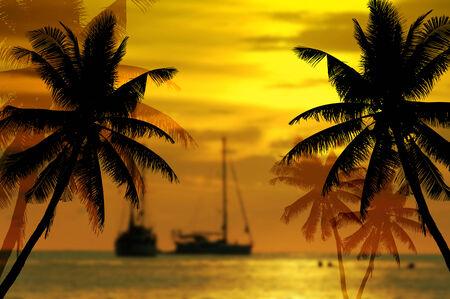 Coconut palms silhouette on sand beach  photo