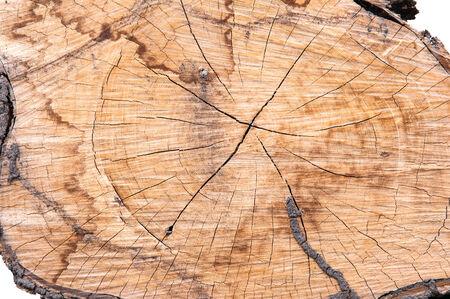 stumped: Tree stump texture
