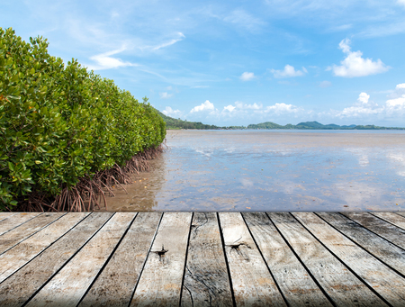 wood floor: Mangrove forest in the tropical place with wood floor Stock Photo