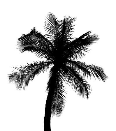 palm tree silhouette: Silhouette of coconut tree isolated on white background with clipping path Stock Photo