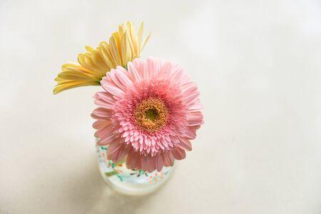 glass vase: daisy-gerbera in glass vase