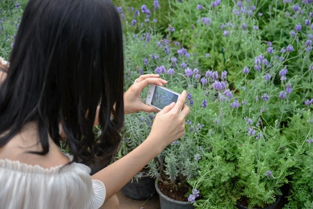 snaps: Girl snaps a picture of lavender flowers with the mobile phone