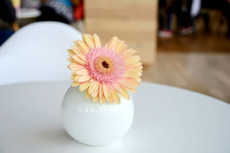 home accent: daisy-gerbera in vase
