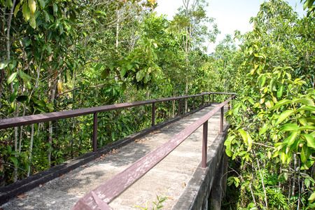 unwanted flora: Pathway in mangrove forest
