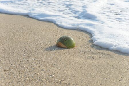 holidaymaker: Coconut on the beach