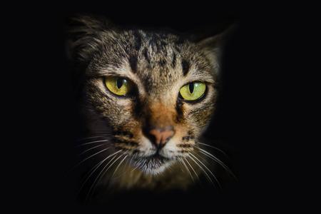 face close up: Close up Thai cat face