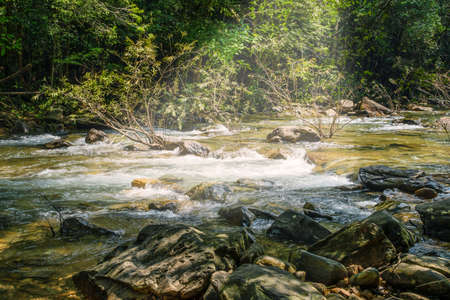 rill: Stream in forest, Nature rill flow