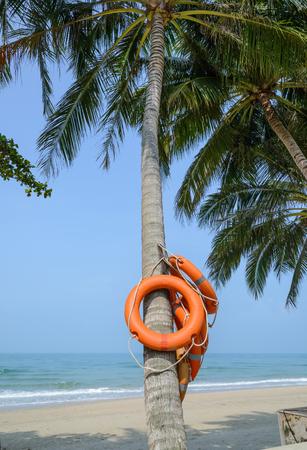 buoy: Life Buoy on coconut tree Stock Photo