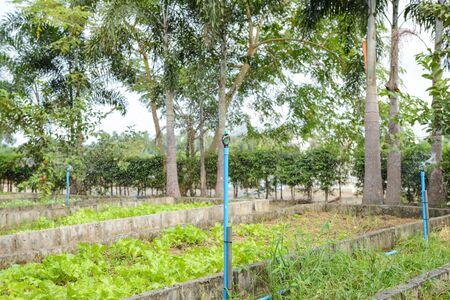 sprinkle system: Sprinkler, Garden irrigation system watering lawn Stock Photo