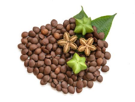 Plukenetia volubilis, sacha peanut,  or sacha inchi (fresh, dried and seeds) on white background, herb and nature Stock Photo