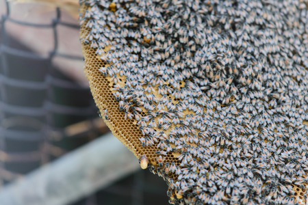 studious: bees on honeycomb