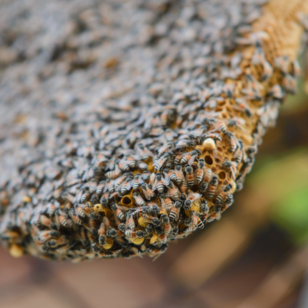 Close up view of bees on honeycomb Stock Photo