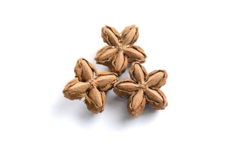volubilis: Plukenetia volubilis, sacha peanut, or sacha inchi on white background, herb and nature Stock Photo