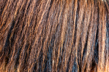 detailed horse hair or horse mane - texture, background