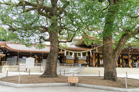 Tokyo, Japan, July 2018: Giant rope between tree. The copled trees have become a symbol of happy marriage and harmonious life within the family at Meiji Shrine or Meiji Jingu in Shibuya, Tokyo, Japan Redakční