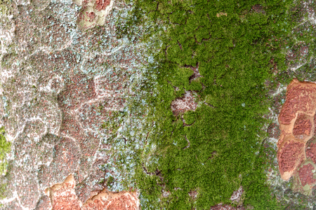 close-up moss growing on tree trunk in rain forest. Tree bark with green mossy Stock Photo
