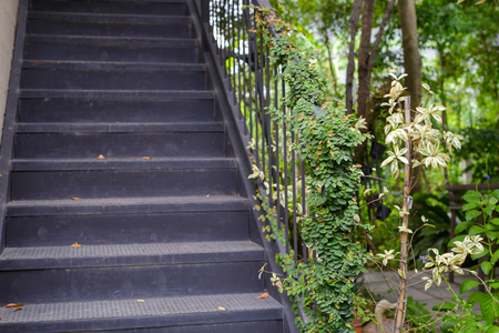 green ivy plant growth at vintage handrail with back steel staircase. exterior architectural