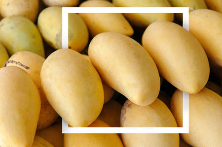 White paper frame with many ripe mangoes as a background in the market at Thailand.  yellow mangoes. Tropical fruit