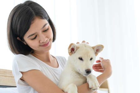 White Shiba Inu Japanese pedigree adorable puppy staying on bed with young woman in bedroom. Pet Lover concept