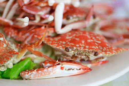 closeup of steamed Crab on dish  photo
