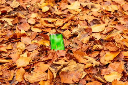 Fallen autumn leaves background with smartphone isolated with greenscreen outdoors. Stok Fotoğraf