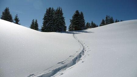 freshly fallen snow: Sentiero in appena caduta neve Archivio Fotografico