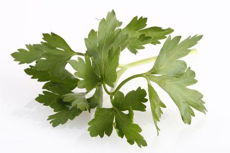 Italian parsley on white